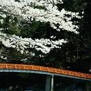Korankei壁紙の画像(壁紙.com)