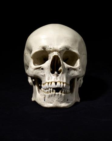 Human Skull「Anatomically correct medical model of the human skull」:スマホ壁紙(2)