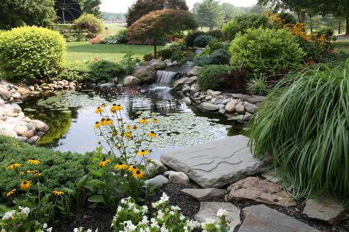 Koi Carp「the perfect backyard」:スマホ壁紙(4)