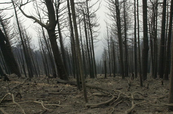 Aspen Tree「Aspen Fire 35% Contained」:写真・画像(1)[壁紙.com]