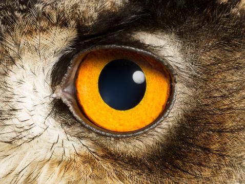 Iris - Eye「Eye of an Eagle Owl, close up」:スマホ壁紙(11)