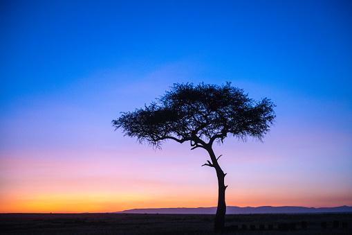 Saturated Color「Mara sunrise」:スマホ壁紙(17)