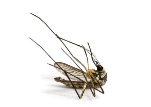 大昔の「Dead Mosquito」:スマホ壁紙(18)