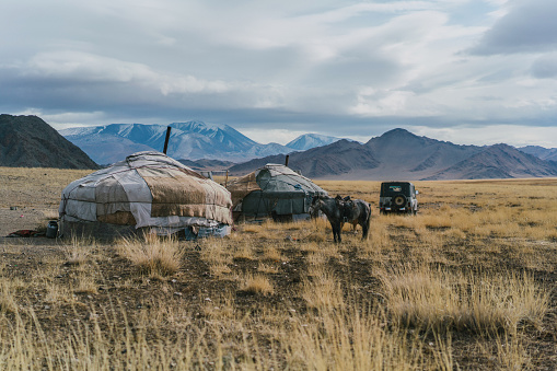 Tent「Mongolian tribe village in steppe in Mongolia」:スマホ壁紙(11)