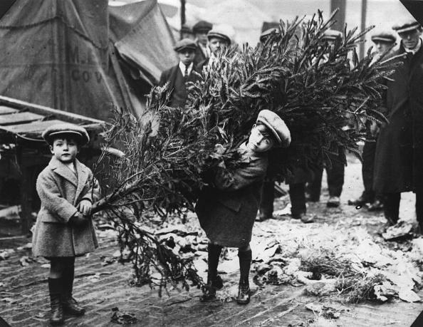 Tree「Christmas Tree」:写真・画像(15)[壁紙.com]