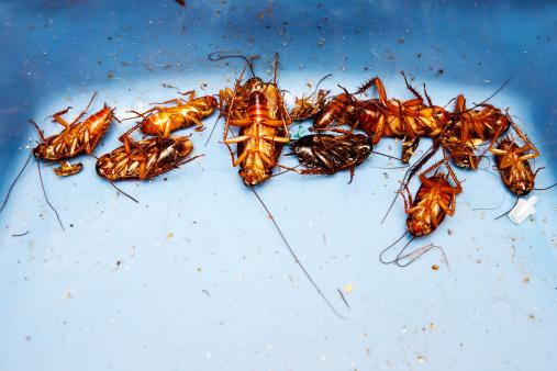 建築「Lots of very dead cockroaches」:スマホ壁紙(12)