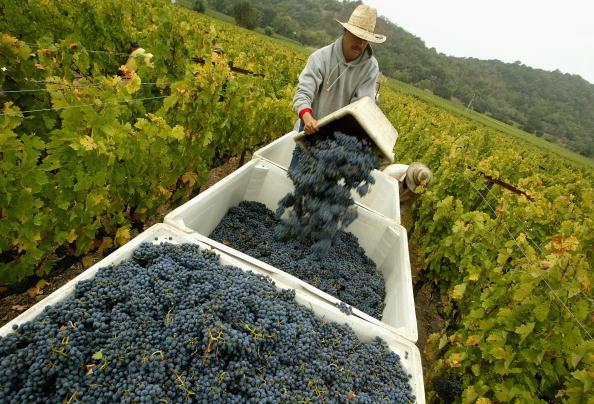 Wine「Napa Valley Harvests Its Bounty」:写真・画像(18)[壁紙.com]