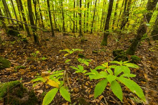 Monte Amiata「Beech Forest」:スマホ壁紙(10)