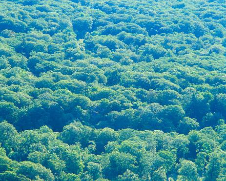 Hokkaido「Beech forest」:スマホ壁紙(17)