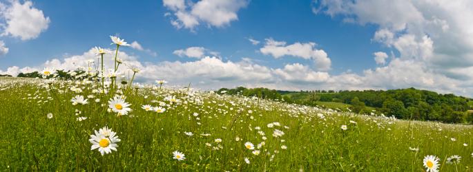 Wildflower「Perfect summer meadow」:スマホ壁紙(16)