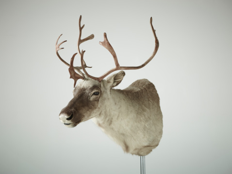質感「Reindeer bust taxidermy」:スマホ壁紙(18)