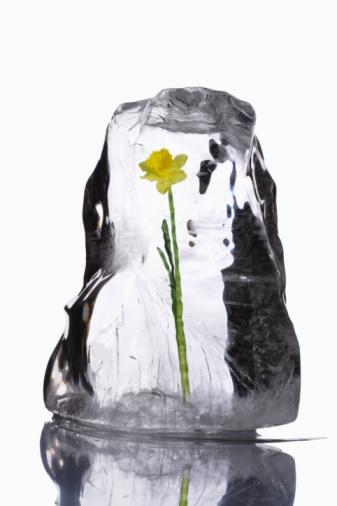Block Shape「Flower in block of ice」:スマホ壁紙(14)