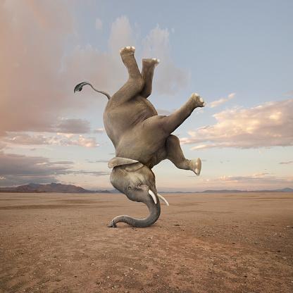 Effort「Elephant Skillfully Performing A Headstand」:スマホ壁紙(11)