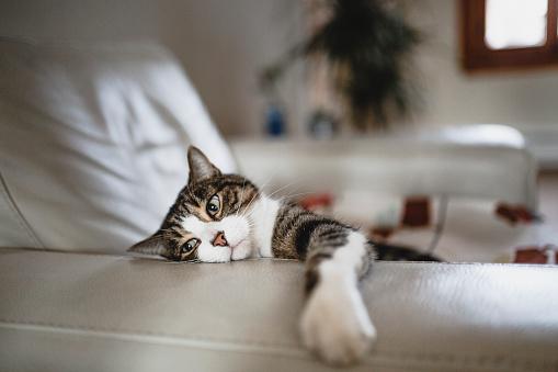 Tabby Cat「Tired cat on an armchair」:スマホ壁紙(18)