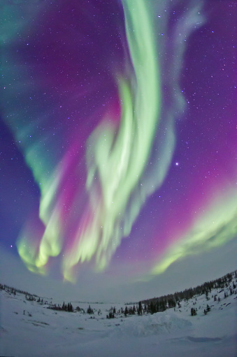 Boreal Forest「The Northern Lights in Churchill, Manitoba, Canada.」:スマホ壁紙(13)
