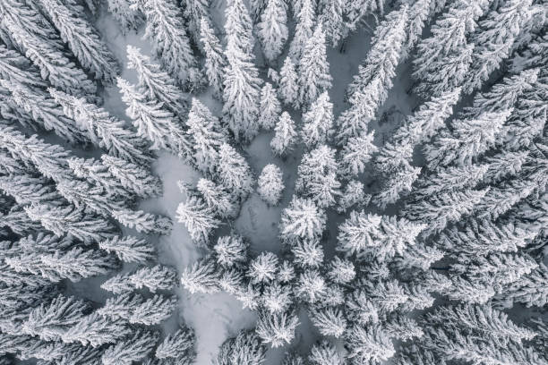 Aerial view of pine trees covered with snow:スマホ壁紙(壁紙.com)