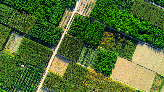 Agricultural Activity「Aerial view of fields」:スマホ壁紙(4)