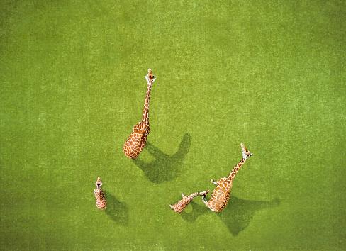 動物「キリンの航空写真」:スマホ壁紙(12)