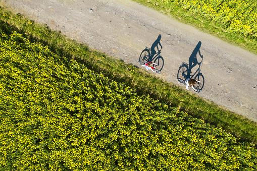 田畑「菜種畑間の空のアスファルト道路上の自転車の影の空中写真」:スマホ壁紙(4)