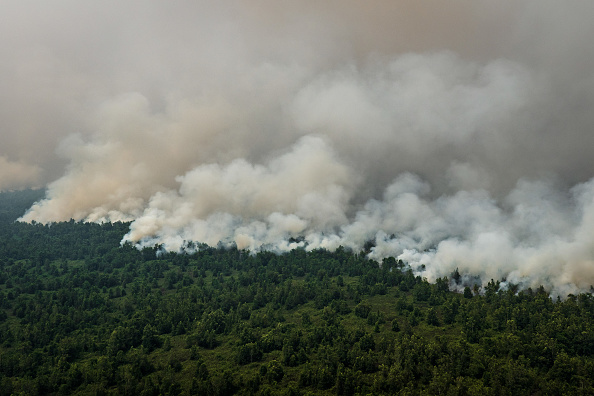 The Natural World「Forest Fires Rages In Indonesia」:写真・画像(0)[壁紙.com]