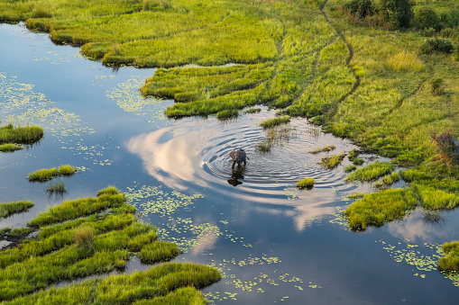 Animal「Aerial view of elephant, Okavango Delta, Botswana」:スマホ壁紙(19)