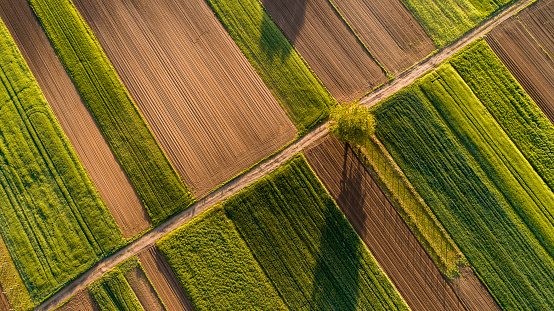 Agricultural Field「Aerial view of tree and fields」:スマホ壁紙(7)