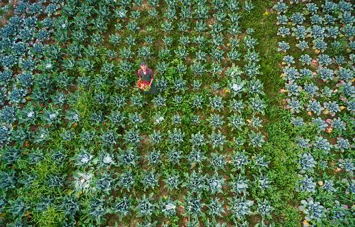 田畑「農家の家庭菜園での空撮」:スマホ壁紙(8)