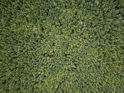 Boreal Forest「Aerial View of Boreal Nature Forest in Summer」:スマホ壁紙(0)
