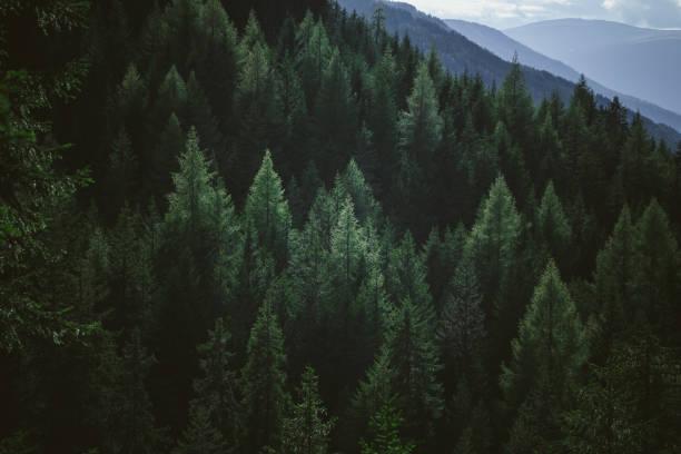 山の林の緑夏木立の航空写真:スマホ壁紙(壁紙.com)