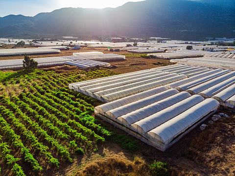 Agricultural Activity「Aerial View of Greenhouse」:スマホ壁紙(10)