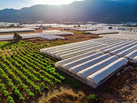 Asparagus「Aerial View of Greenhouse」:スマホ壁紙(6)