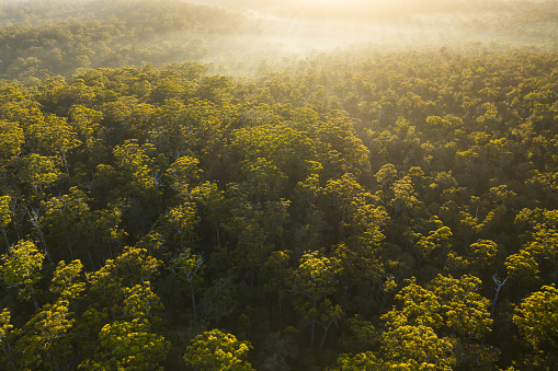 Western Australia「Aerial view of the Karri Forest, Pemberton, Western Australia, Australia」:スマホ壁紙(19)