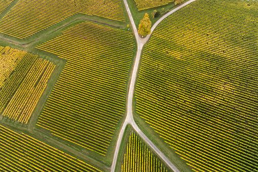 田畑「道路のブドウ畑とフォークの空中写真」:スマホ壁紙(3)