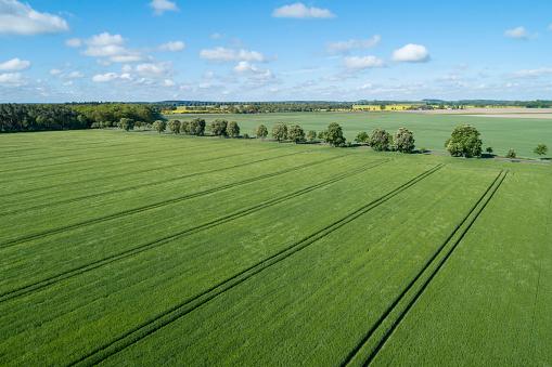 Ecosystem「Aerial view of treelined road through agricultural fields, springtime. Mecklenburg-Vorpommern, Mecklenburg Western Pomerania, Germany.」:スマホ壁紙(7)