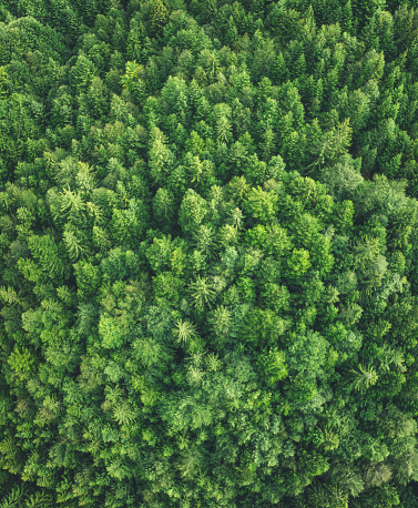 Pine Woodland「Aerial View On Green Forest」:スマホ壁紙(6)