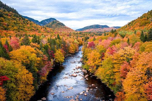 Boreal Forest「Aerial View of Boreal Forest Nature in Autumn Season, Quebec, Canada」:スマホ壁紙(4)