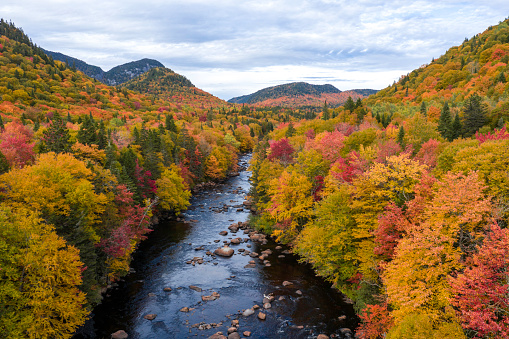 Boreal Forest「Aerial View of Boreal Forest Nature in Autumn Season, Quebec, Canada」:スマホ壁紙(11)