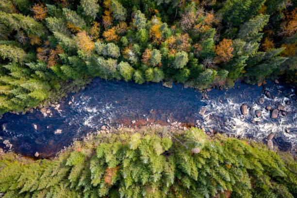 秋の紅葉シーズン、ケベック、カナダの寒帯の森林自然の空撮:スマホ壁紙(壁紙.com)