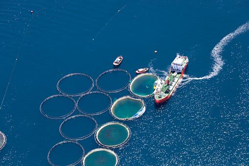 Development「Aerial view of fish farm」:スマホ壁紙(2)