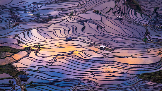 Agricultural Field「Aerial view of Terraced rice fields, Yuanyang, China」:スマホ壁紙(4)