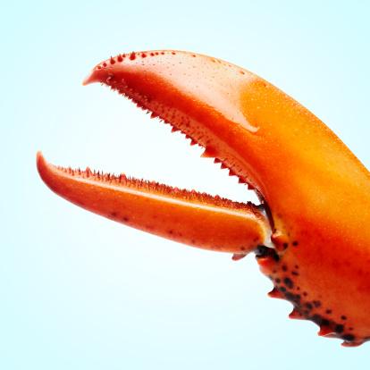 Domination「lobstermayhem claw 01」:スマホ壁紙(17)