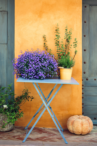 Gardening「Provencal decoration: flowers and thyme on a table against yellow wall.」:スマホ壁紙(6)