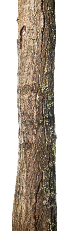 Log「Trunk isolated」:スマホ壁紙(13)