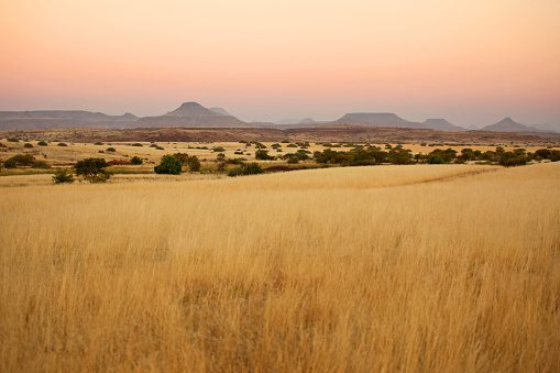 Safari「Beautiful Northern Namibian Savannah Landscape at Sunset」:スマホ壁紙(2)