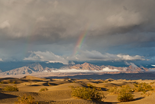 グレープバイン山「夕暮れ時のメスキートの平らな砂丘の上の虹」:スマホ壁紙(18)