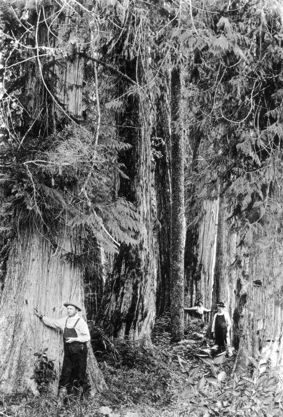 British Columbia「Sitka Spruce」:写真・画像(14)[壁紙.com]