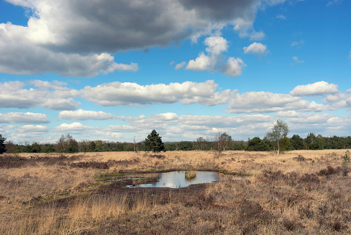 North Brabant「Nature reserve the Malpie near Valkenswaard,the Netherlands」:スマホ壁紙(14)