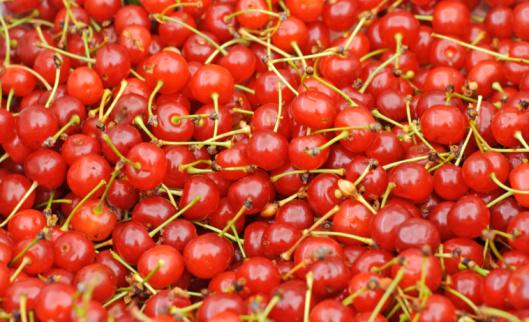 Tasting「Montmorency Cherries at the Market」:スマホ壁紙(7)