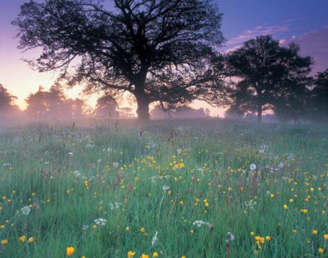 Wildflower「England, Gloucestershire, wildflowers growing in meadow at dawn」:スマホ壁紙(7)