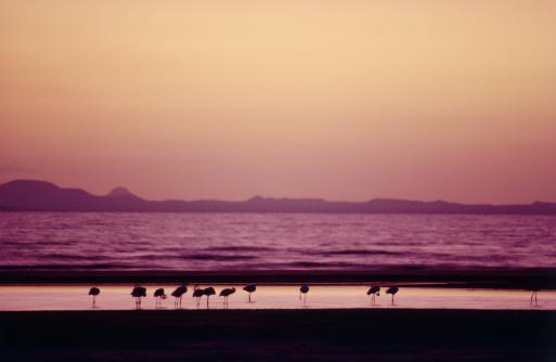Flock Of Birds「Flamingos by Lake Turkana」:スマホ壁紙(10)